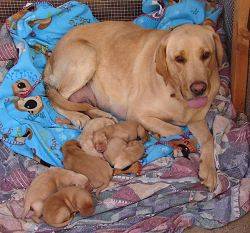 Honey and Puppies