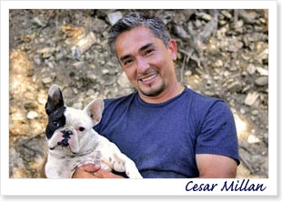 Cesar Millan - The Dog Whisperer