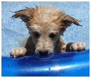 Cute Puppy in a pool